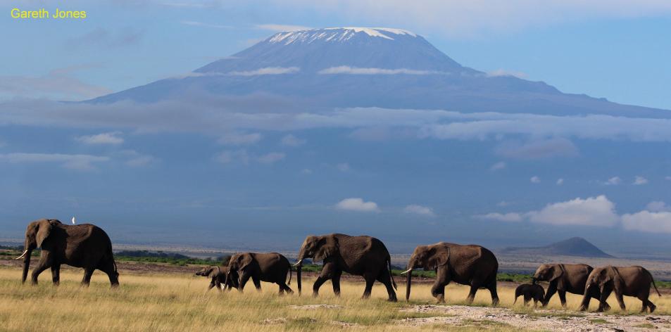 Awesome Amboseli!! - Article by Gareth Jones