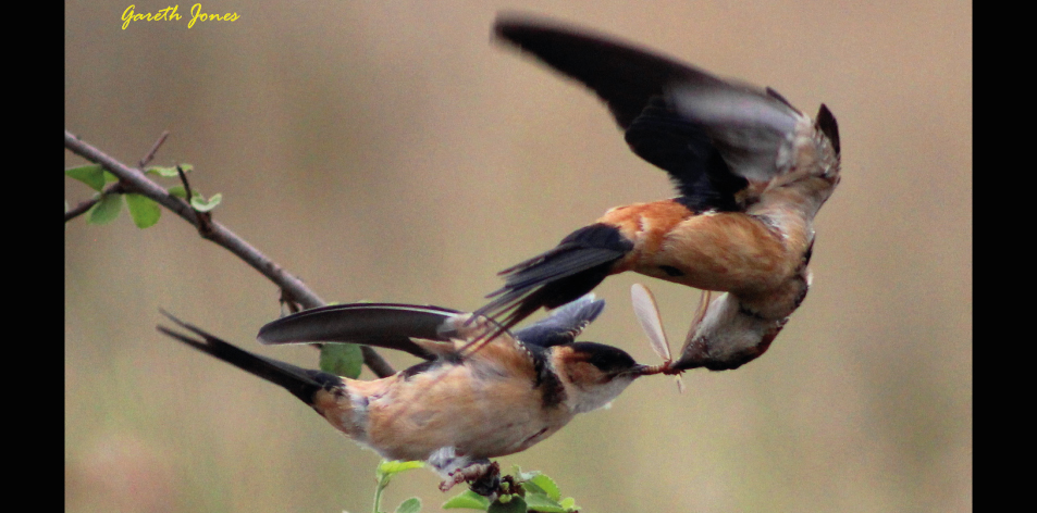 flight feeding frenzy