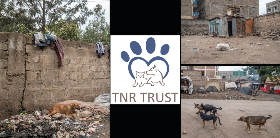 TNR Trust- The Looming Dog/Cat Problem