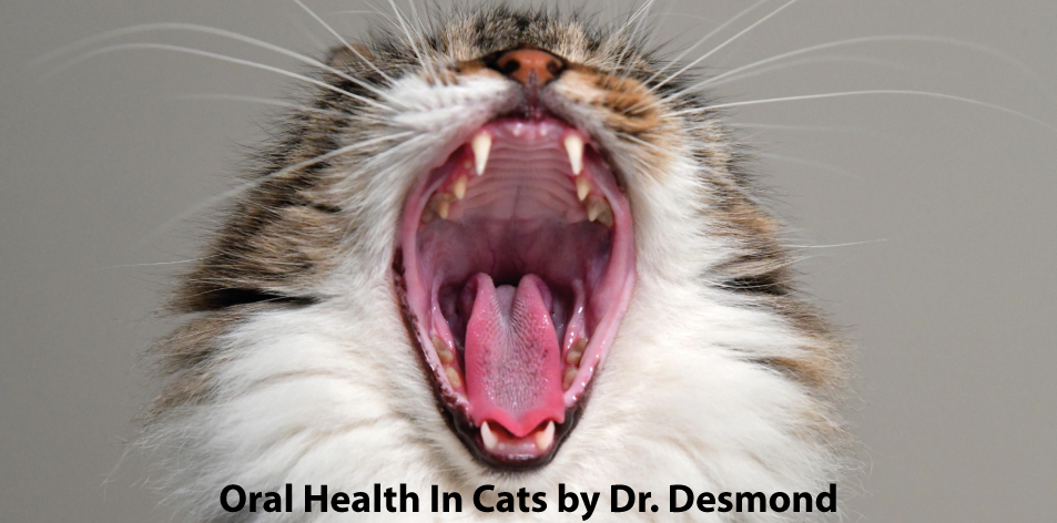 oral health in cats