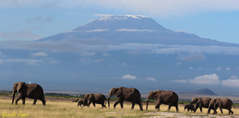 Kenya's Elephants