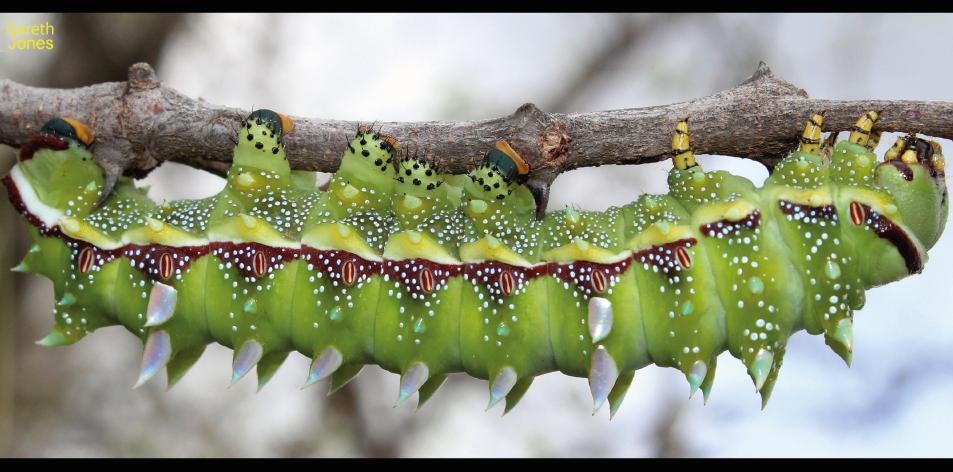 worms & wonderful wings