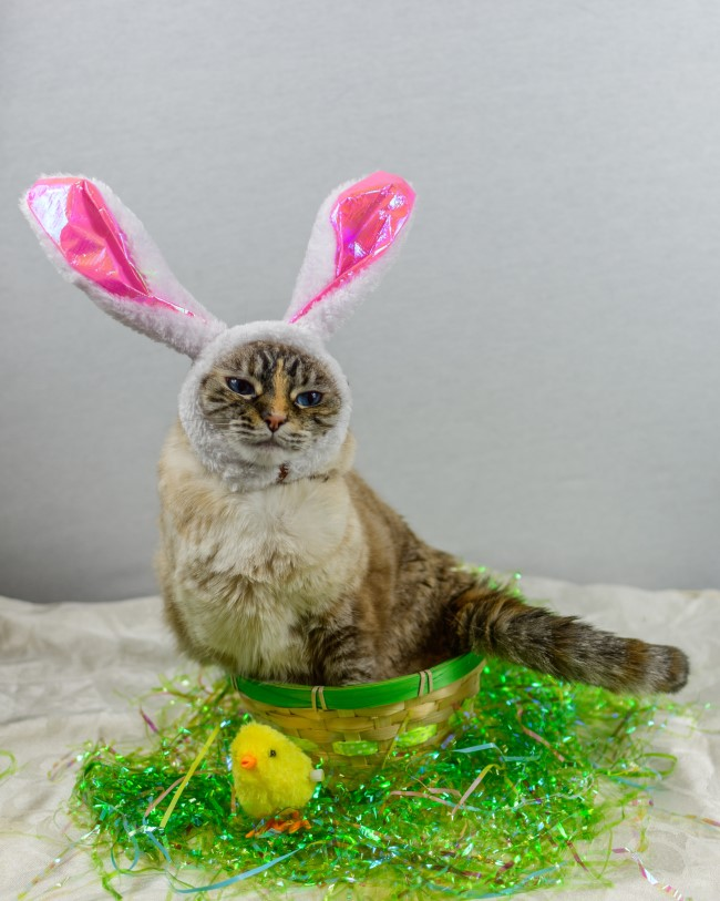 a pawesome easter gift
