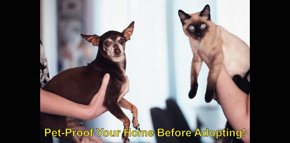 pet-proofing