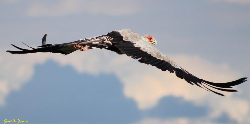 Hunter Bird