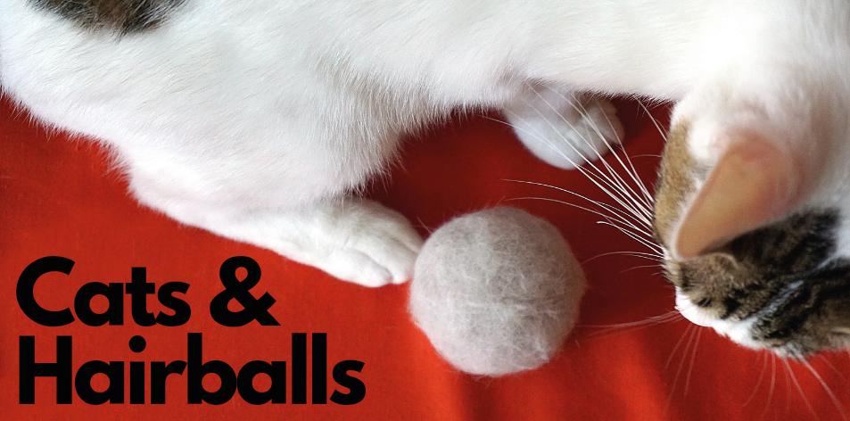 cat hairballs