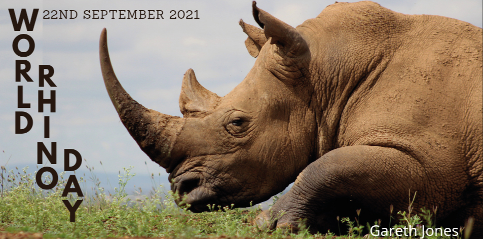 Go Rhino Go